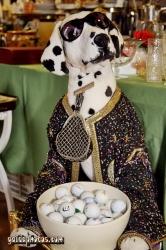 Flohmarktfotos - Hund mit Goflbällen