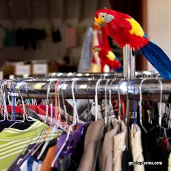 Papagei Kleiderstange