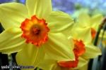 verkaufsoffener-sonntag-27-03-2011-koeln