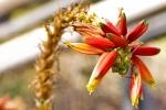 Subtropische Pflanzen in der Kölner Flora