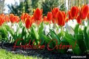 Osterkarte,,  Tulpen, Krokus