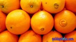 Desktop Hintergrund Orangen