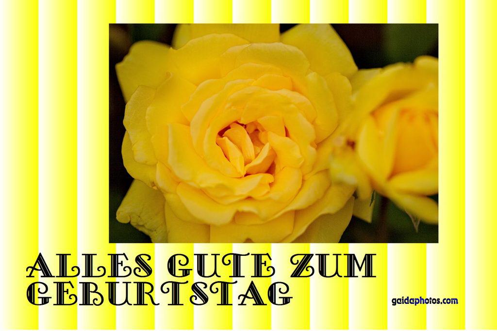 Geburtstagskarte, Rose, gelb