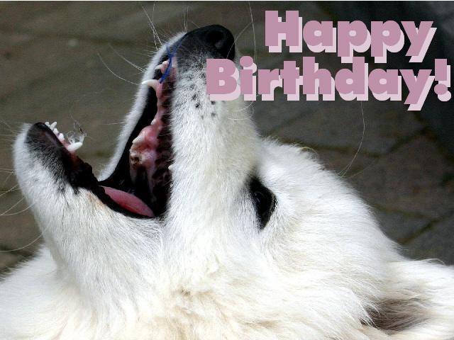 kostenlose Geburtstagskarten
