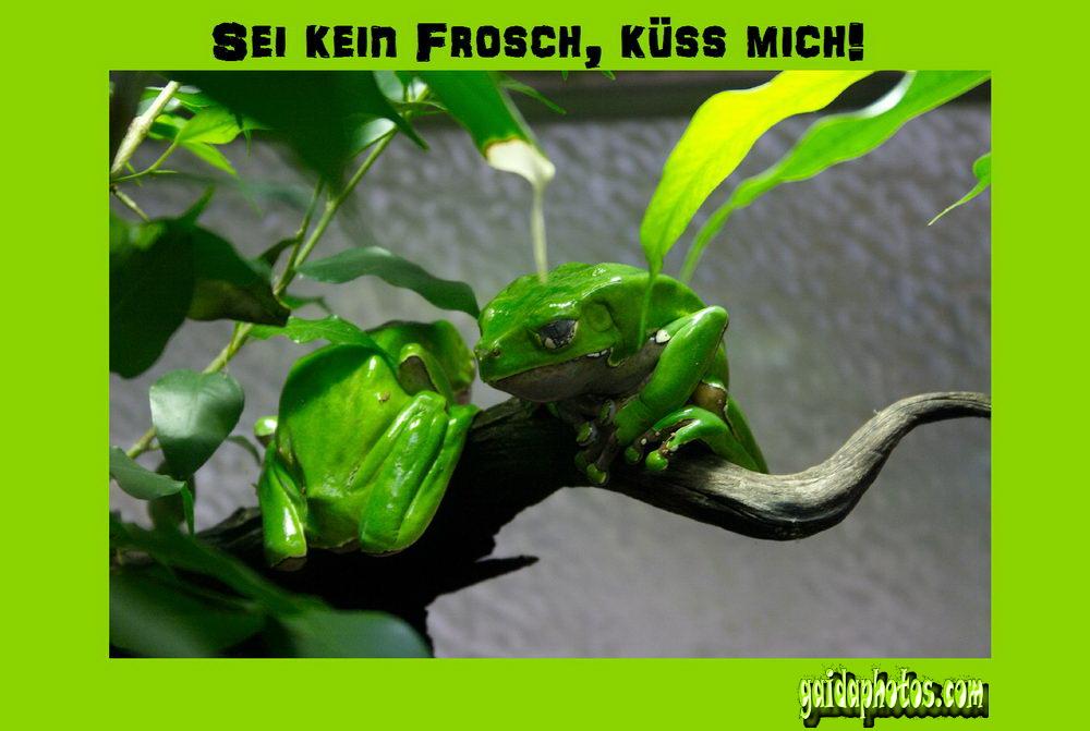 Frosch archive gaidaphotos fotos und bilder - Frosch auf englisch ...