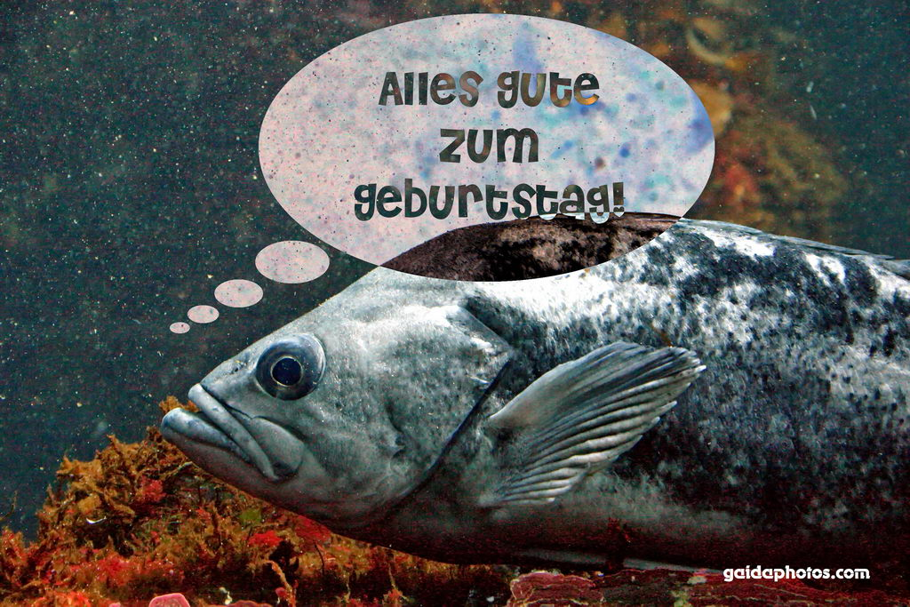 Geburtstagskarte, Fisch