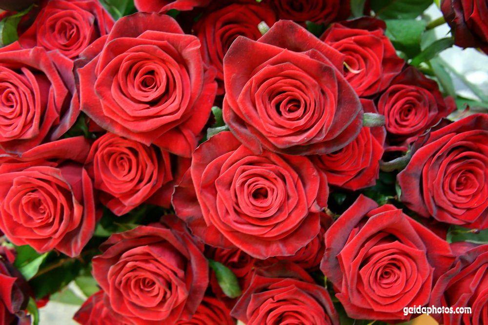 rote rose messel fkk frauen kostenlos